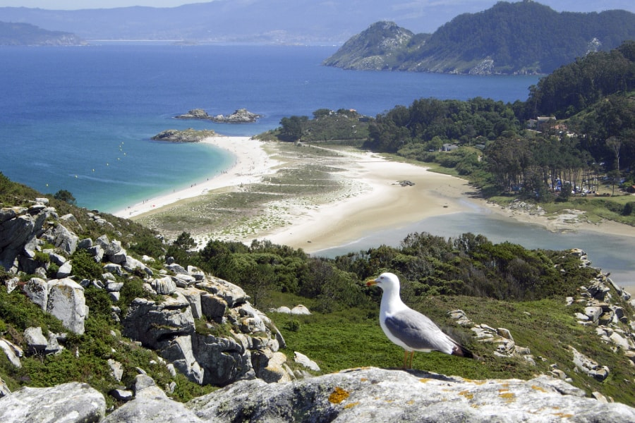 Turismo ornitológico en Pontevedra, Rías Baixas