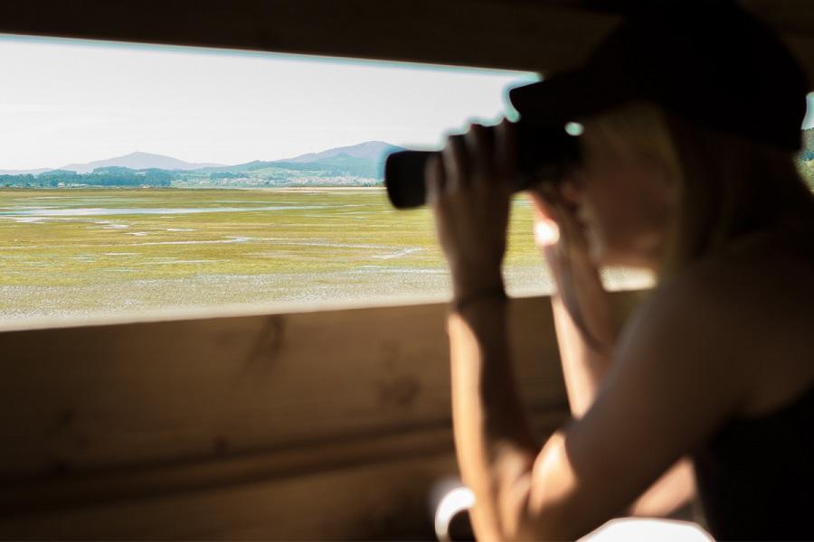 Observación de aves en Pontevedra