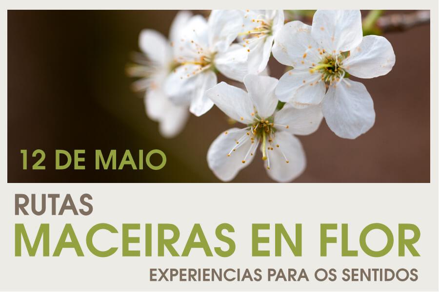 Ruta Manzanos en Flor, organizada por Deputación de Pontevedra