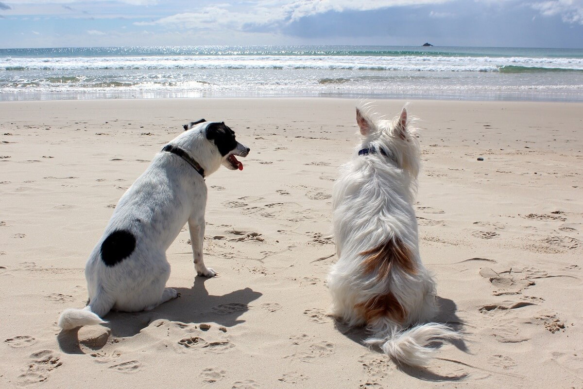 Playas para perros en Pontevedra y Rías Baixas