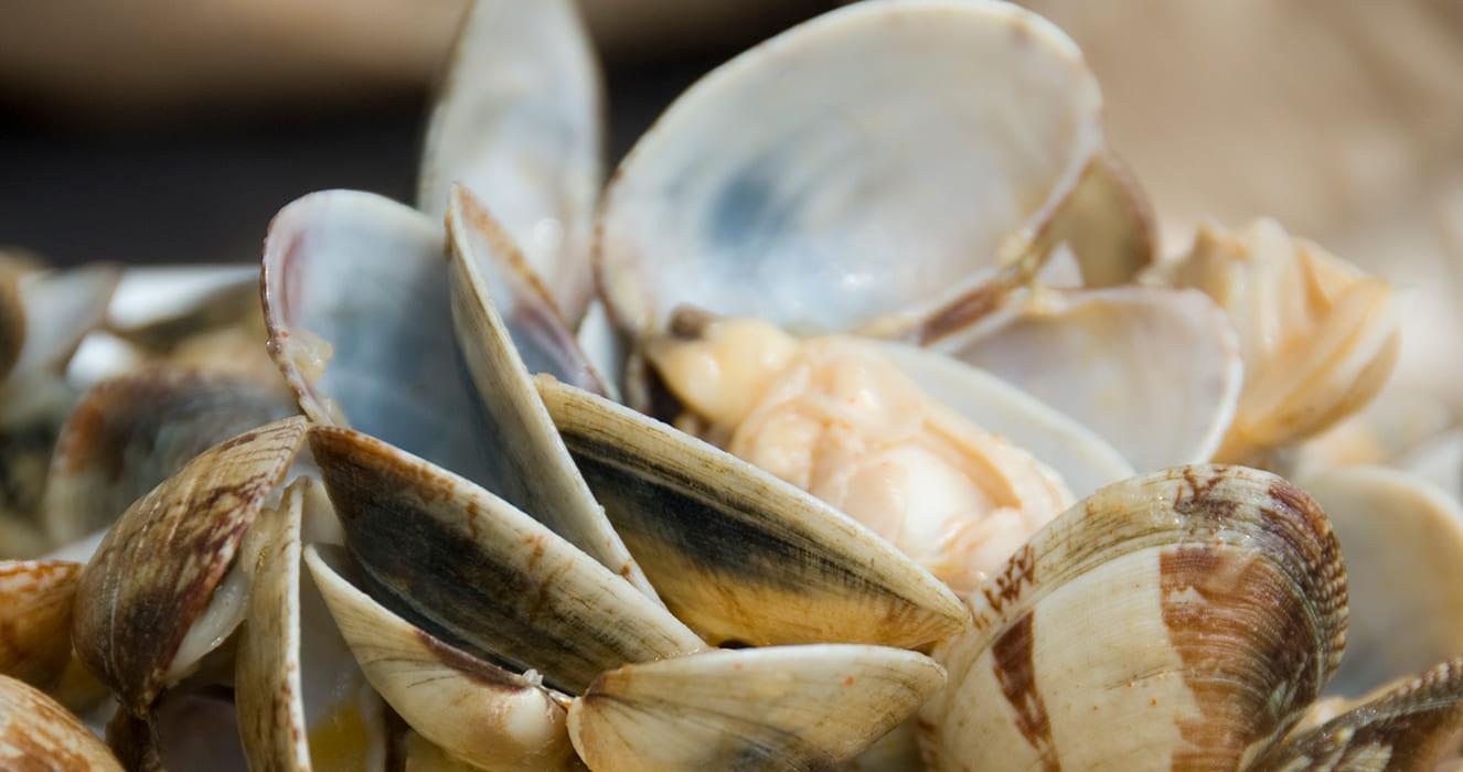 Ameixas marisco gastronomía Rias Baixas