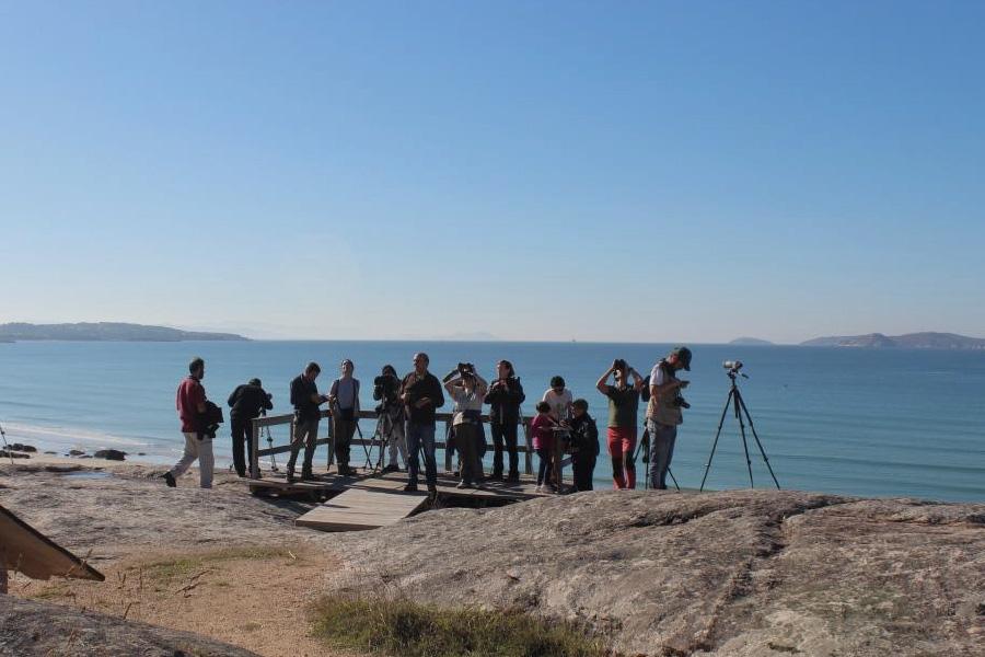 Avistamento de aves birding na provincia de Pontevedra